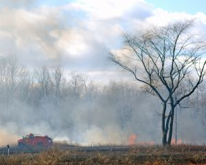 1151709_preventing_forest_fires_1[1]