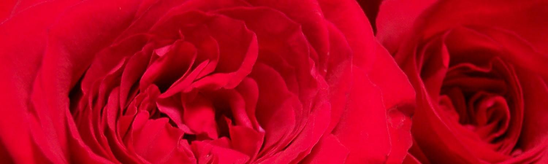cropped-rose-rosse1.jpg